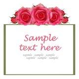 Kader met roze roze bloemen Royalty-vrije Stock Foto