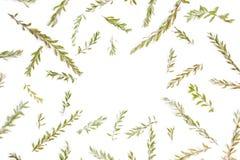 Kader met takken, bladeren en bloemblaadjes op wit worden geïsoleerd dat Royalty-vrije Stock Afbeeldingen