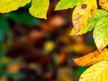Kader uit bladeren met warme kleuren van de herfst wordt samengesteld die stock foto