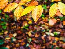 Kader uit bladeren met warme kleuren van de herfst wordt samengesteld die stock afbeeldingen