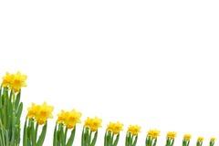 Kader uit gele narcissen stock fotografie