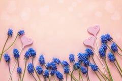 Kader van blauwe muscaribloemen en decoratieve harten op roze rug Royalty-vrije Stock Foto