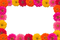 Kader van bloem Zinnias royalty-vrije stock fotografie