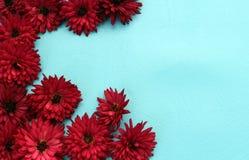 Kader van chrysantenbloemen wordt gemaakt op een blauwe achtergrond die royalty-vrije stock fotografie