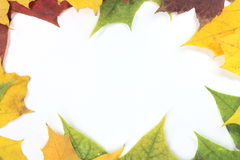 Kader van esdoornbladeren Royalty-vrije Stock Foto's