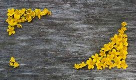 Kader van gele bloemen op een houten achtergrond stock afbeelding