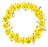 Kader van gele madeliefjes Waterverfhand getrokken illustratie vector illustratie