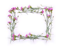 Kader van gevoelige bloemen De lente roze bloemen op witte achtergrond Stock Afbeeldingen