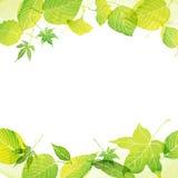 Kader van groene bladeren door waterverfverf Royalty-vrije Stock Afbeelding