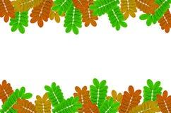 Kader van groene bladeren en varen op witte achtergrond voor geïsoleerd Stock Foto's