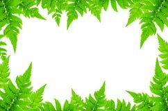 Kader van groene bladeren en Varenbladeren op witte achtergrond voor geïsoleerd Royalty-vrije Stock Fotografie