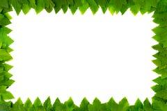 Kader van groene bladeren op witte achtergrond met exemplaarruimte voor tekst Grens Stock Fotografie