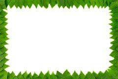 Kader van groene bladeren op witte achtergrond met exemplaarruimte voor tekst Grens Stock Foto