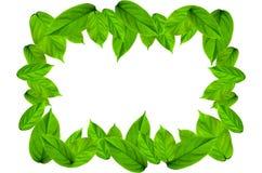 Kader van groene bladeren op witte achtergrond voor geïsoleerd Royalty-vrije Stock Foto's
