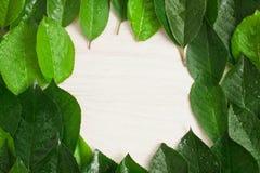 Kader van groene bladeren, witte houten achtergrond Royalty-vrije Stock Fotografie