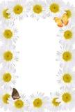 Kader van Kamilles met Vlinders Royalty-vrije Stock Afbeelding