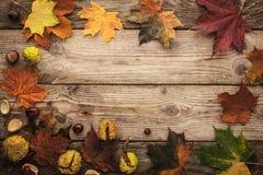 Kader van kastanjes en herfstesdoornbladeren met horizontale het effect van de filmfilter Royalty-vrije Stock Afbeeldingen