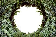 Kader van Kerstboomtakken stock afbeelding