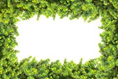 Kader van pijnboom wordt op witte achtergrond wordt geïsoleerd gemaakt die stock foto's