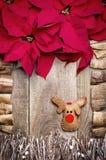Kader van poinsettiabloemen wordt geschikt, stokken, takjes, drijfhout dat Stock Foto