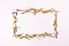 Kader van roze kleur voor inschrijvingen Royalty-vrije Stock Afbeeldingen