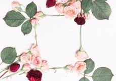 Kader van roze rozen, rode bloemen op een witte achtergrond wordt gemaakt die Royalty-vrije Stock Foto's