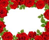Kader van rozen Rode rozen op een witte achtergrond Royalty-vrije Stock Fotografie