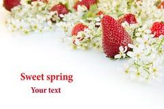 Kader van sappige aardbeien op een witte achtergrond Geïsoleerde Kader met bespaarde plaats macro, textuur De achtergrond van het Stock Foto