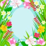 Kader van tropische bloemen Royalty-vrije Stock Fotografie