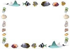 Kader van vissen en shells op witte achtergrond worden geïsoleerd die Stock Foto