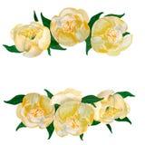 Kader van waterverf het gele Japanse pioenen royalty-vrije illustratie