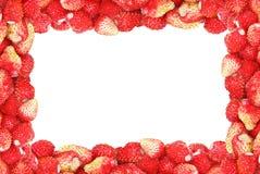 Kader van wilde die aardbei op een witte achtergrond wordt geïsoleerd Stock Foto's