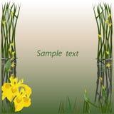 Kader voor de tekstkaart met de tekening Stock Foto