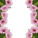 Kader voor tekst met de lentebloemen van roze kers, sakura, op een witte achtergrond Idee voor ontwerpprentbriefkaar, uitnodiging stock illustratie