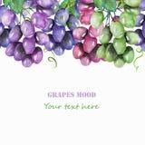 Kadergrens, malplaatje voor prentbriefkaar met de purpere, violette, groene en blauwe die takken van druiven in waterverf worden  royalty-vrije illustratie
