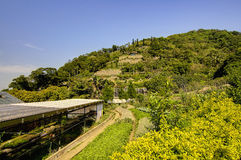 Kadoorie Farm at Hong Kong Stock Photography