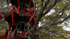 Kadzidłowego palnika i ginkgo drzewo w wiatrze, zabytki, antyki, kultura zbiory wideo