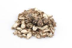 Kaempferia galanga, Sand Ginger, Aromatic Ginger, Resurrection Lily. Stock Photography