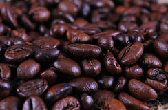Kafe bean Stock Images