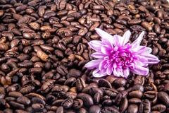 Kaffe kärnar ur med blomman Royaltyfri Fotografi