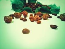 Kaffe och härlig sammansättning för ekollonar mycket med en lista som är full av kaffe Arkivbilder