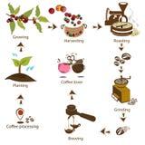 Kaffe som stegvis bearbetar från bönan till kaffevännen Arkivfoto