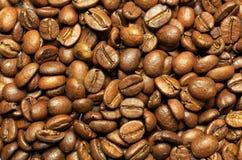 Kaffe Tanzania Kilimanjaro Arkivfoto