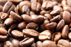 Kaffeböna Royaltyfri Foto