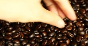 kaffeböna för hacka 4k vid handen, material för drinkkoffeinmat, läcker diskböna stock video