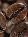 Kaffeböna i djupa skuggor Arkivfoto