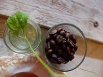 Kaffeböna och gräsplanblad Fotografering för Bildbyråer