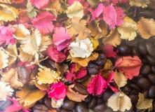 Kaffebönan och torkar blomman Arkivbilder