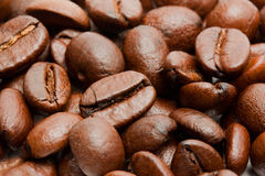 Kaffebönor Royaltyfri Foto