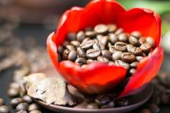 Kaffebönor i den röda blomman för knopp Royaltyfri Foto